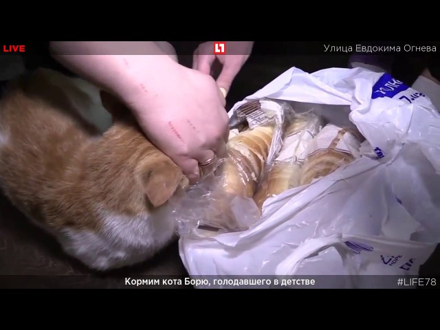 Боря набросился на булку при журналистках Boris give me bread sequel continuation