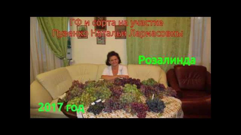 РОЗАЛИНДА- ранний виноград (Пузенко Наталья Лариасовна).