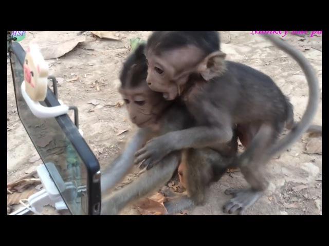 Вот и обезьяны уже научились пользоваться смартфоном