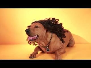 Домашние животные в париках