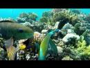 Подводный мир ,Красное море, Египет.