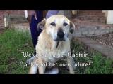 Добрые люди хотели забрать эту собаку и помочь ей, но была причина, по которой она отказалась