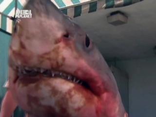 Дикие и опасные. Фильм 34. Игры с акулами