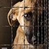 Помощь животным с ветприемника (ГЭЦ) г.Челябинск