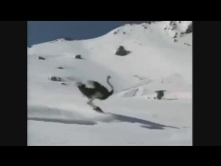 Крутость этого страуса зашкаливает/IT'S TIME VIDEO