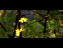Живая природа _ Осень _ Листопад
