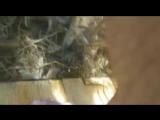 табиғат ғажап
