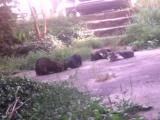 Я с Никитиным и Махой кормим котов валерьянкой