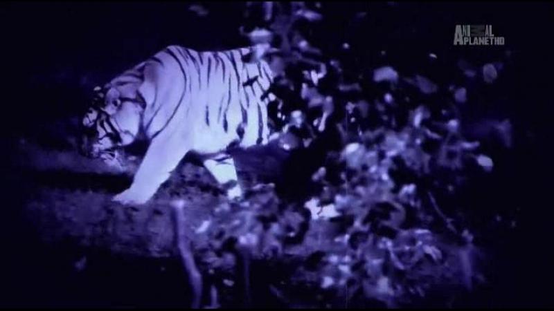 Месяц монстров - Month of monsters (2014) 8. Добыча - человек