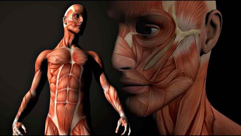 Discovery. Тело человека. Грани возможного. Человеческий мозг