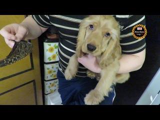 Собачья жизнь: Проверяем нюх у Ричарда, готовимся к охоте!))