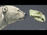 Drawing - Polar Bear starting with the skull