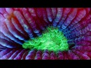 National Geographic Bioluminescent Creatures Documentary 2016 HD 1080p