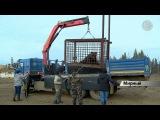 В Мирном провели спецоперацию по спасению медведя