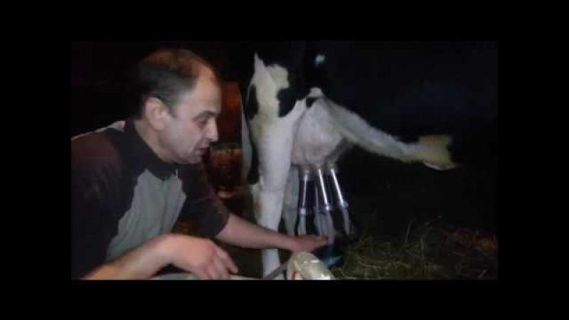 Дойка коров. Ручное доение и доильным аппаратом