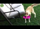 Dog PWND by swinging Chair