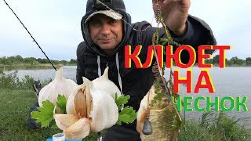 Рыбалка карась чеснок невероятный клев БОМБА ПУФ медовый