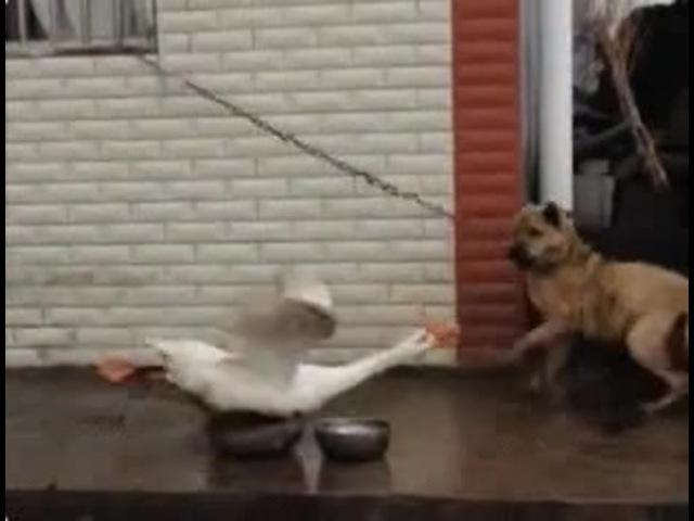 Horror goose