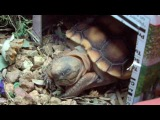 Tiny Tortoise's Silly Sleeping Positions (Taco)