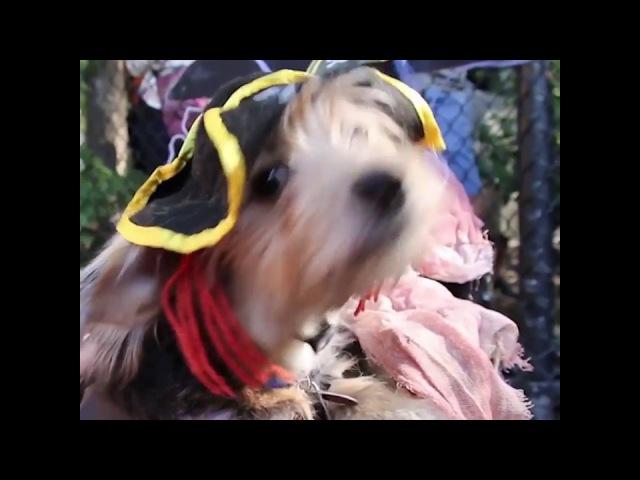 Собачий Хеллоуин