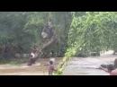 Oh dear God many die in Flood in Nigeria