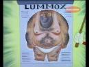 Ren & Stimpy 1994 Lair of the Lummox-1 (Рен и Стимпи 1994 Логово амбала-1)