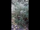 Осенняя прогулка по Дендрариуму