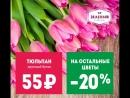 Дарим букет из 21 тюльпана от наших друзей - доставки цветов Зелёный! 🌷