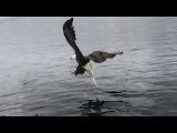 Eagle Eacher Fight
