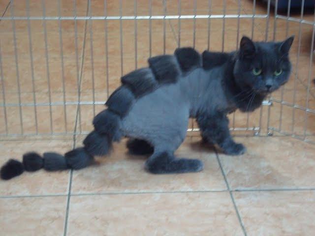 Видео приколы смешное видео с котами и кошками 2017 2 (ТОП приколы 2017 коты и ежики) » Freewka.com - Смотреть онлайн в хорощем качестве