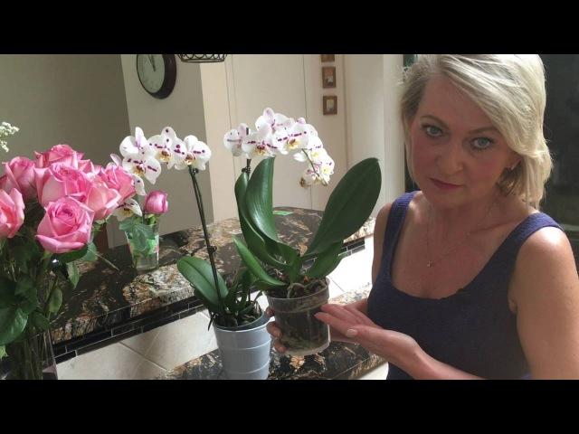Как правильно обрезать цветонос у орхидеи