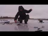 Ловля на безмотылку, окунь по первому льду. Бешеный клёв!