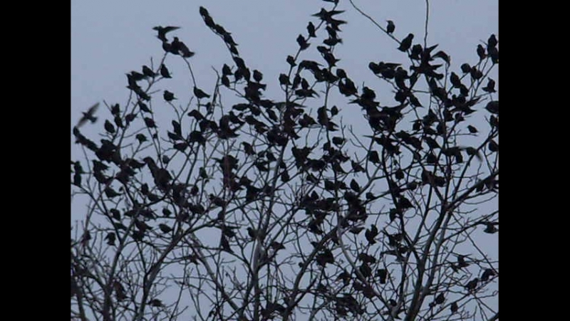 Вчера стая перелетных птиц прилетела ко мне на дачу передохнуть.