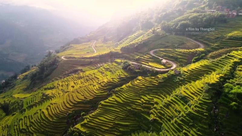 Террасовые поля северного Вьетнама