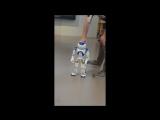 знакомство с роботом NAO