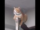 Кот крёстный отец The cat the godfathe