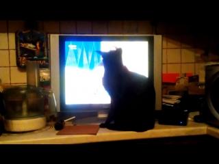 Кот Черныш смотрит и слушает оперу.