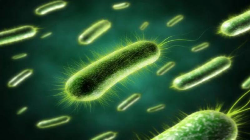 Мир бактерий - Андрей Летаров