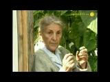 Секреты огурцов - советы опытной огородницы