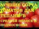 Лучшие сорта томатов для теплиц Средняя полоса и Подмосковье
