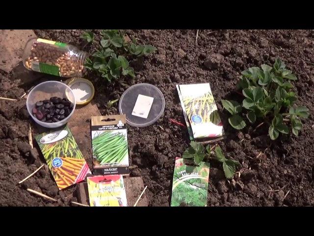 Сеем фасоль и бобы.Природное земледелие.