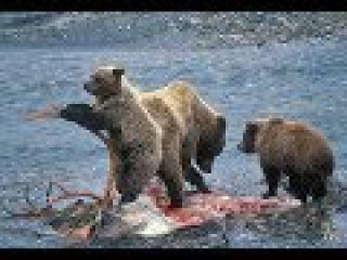 WILD TURKEY. Harsh Paradise - Documentary Films 2017 / Amazing Animals TV