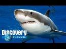 Discovery - Смертельно опасные - Австралия - Документальный фильм