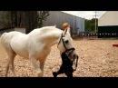 Породы лошадей. Парад пород ( лошади).