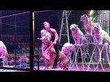 Demidov Circus