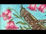 SOMMARNATT - SUMMERNIGHT by Hanna Karlzon - prismacolor pencils