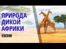 ✪ Поразительный Документальный фильм BBC о природе и животных дикой Африки BBC на