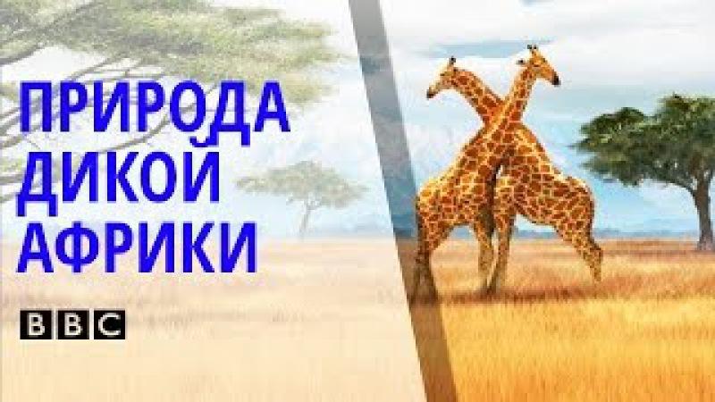 ✪ Поразительный Документальный фильм BBC о природе и животных дикой Африки [BBC на ...
