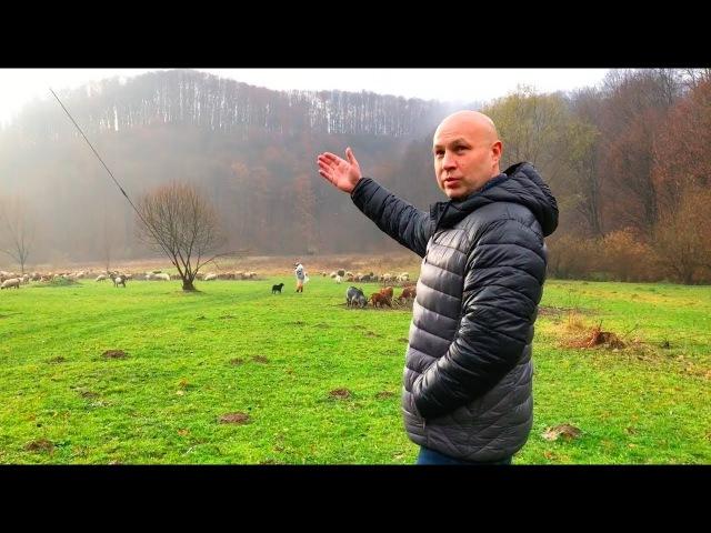 Закарпатье, санаторий Боржава, поездка в Мукачево, форельное хозяйство и ферма буйволов