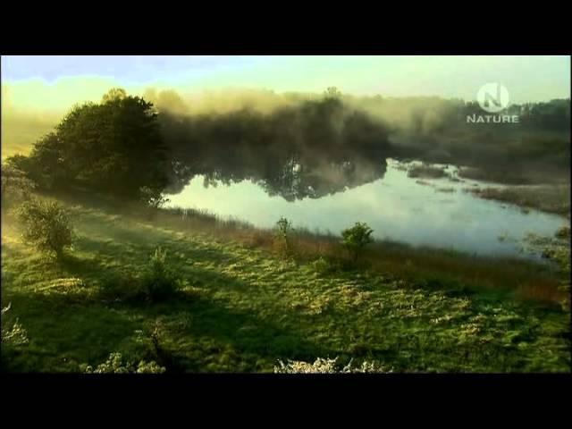 Богемия -- год среди болот / Bohemia -- A Year in the Wetlands